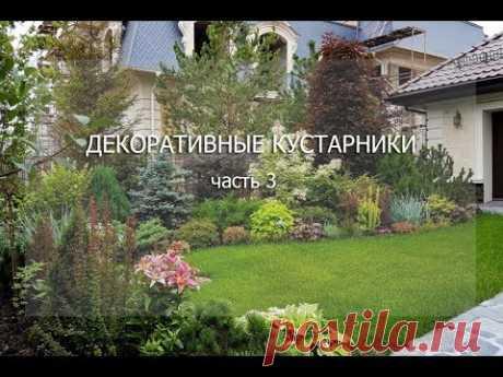 """Вебинар """"Декоративные кустарники. Часть 3"""""""