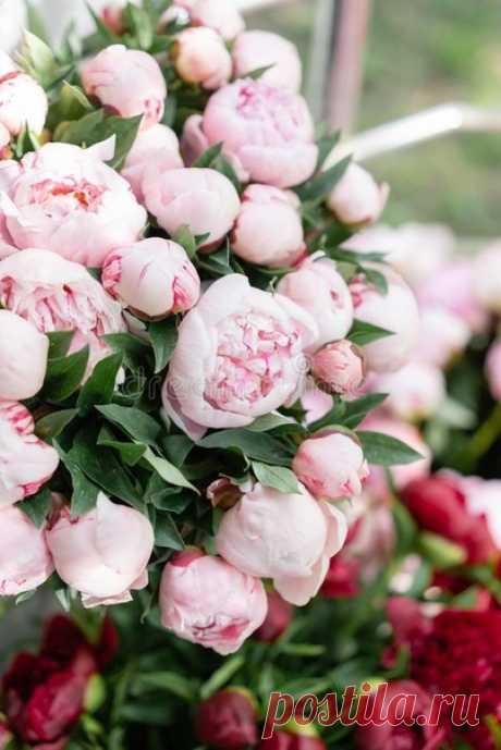 Чувства, они как цветы... Всё прекрасное очень деликатно...  © Ошо
