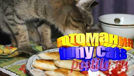 видео смешные коты, смешные видео котов, видео котов смешное, видео коты, видео с котами, для котов видео, коты воители видео, видео котов приколы, кота видео, животные смешные видео, животное смешное, видео смешное животные, про смешных животных, смешное животные, коты приколы, кот приколы, прикол коты, коты прикол, кошки смешное видео, про кошек смешное, смешное кошки, видео смешных кошек, кошек смешных, кошка смешно, смешно про кошек, смешные кошки и, видео кошек, про кошку видео, кот прикол