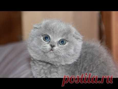 Семья купила через интернет котёнка за 500 рублей и привезла домой. Котик оказался с подвохом