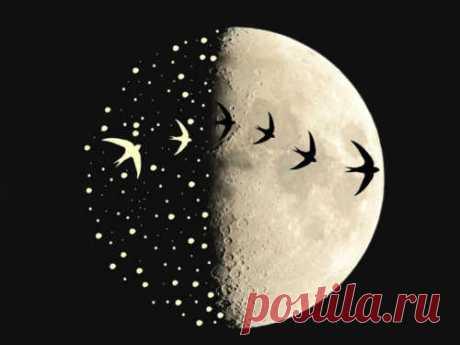 Заговоры нарастущую Луну Растущая Луна обладает мощной энергетикой, которую можно направить наосуществление любых желаний. Вэто время особую силу обретают заговоры напривлечение любви, денег, удачи издоровья.