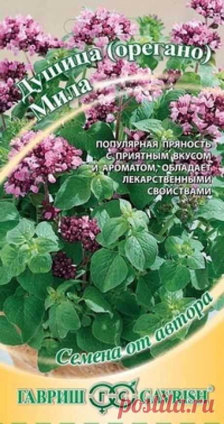 """Семена. Душица (орегано) """"Мила"""" (вес: 0,1 г) Всхожесть: 70%. Многолетнее растение с сильным приятным ароматом и пряным, слегка горьковатым вкусом из семейства Губоцветные. Растение высотой до 50 см, с матово-зелеными яйцевидными листьями, покрыто мягкими щетинистыми волосками. Мелкие светло-пурпурные цветки, собраны в щитковидные..."""