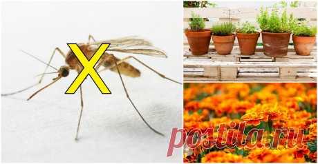 8 растений, которые не мешало бы посадить на балконе или на даче, чтобы избавиться от комаров Близится жаркое лето! Но вместе с пляжным сезоном на улицы многих городов ворвутся и насекомые, которые досаждают своим присутствием и оставляют после себя неприятные последствия в виде зудящих мест с укусами. Использование репеллентов приемлют не все — все-таки химия. Но с надоедливыми комарами и прочей жужжащей «мелочью» можно бороться более приятными методами. Поставив в доме н...