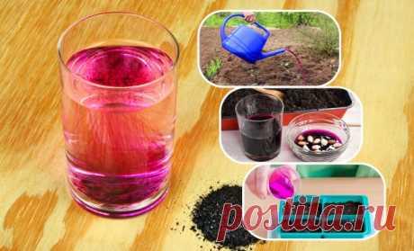 El permanganato: 14 modos insólitos de la aplicación en el jardín, la huerta y el macizo de flores