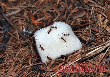 Как избавиться от муравьев на участке - самый эффективный способ