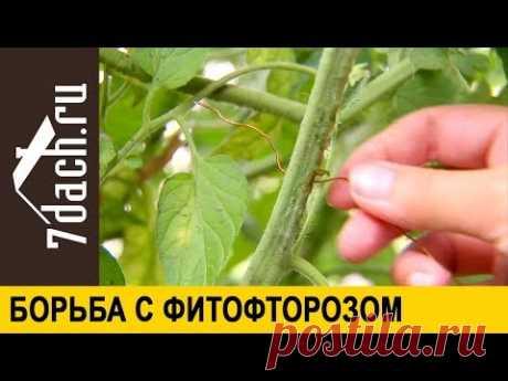 """👩🌾 Борьба с фитофторозом и паутинным клещом без """"химии"""" - 7 дач"""