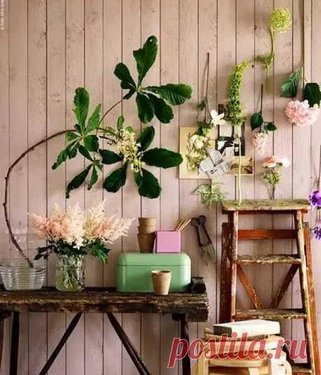10 золотых правил по уходу за комнатными растениями. Часть 2