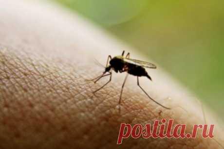 Простые и эффективные средства от комаров