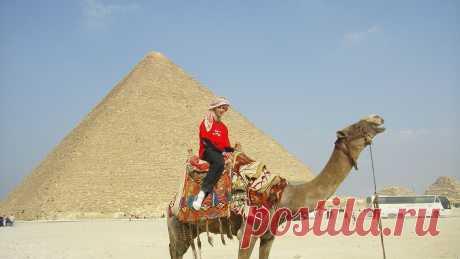 Верблюды для туристов