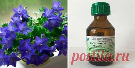 Ваши цветы будут цвести пышно и долго, если воспользоваться этой чудо-подкормкой!