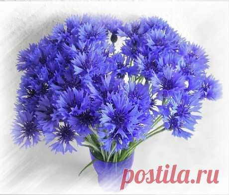 «Плейкаст «Не дари мне цветов покупных!»» — карточка пользователя Ирина в Яндекс.Коллекциях