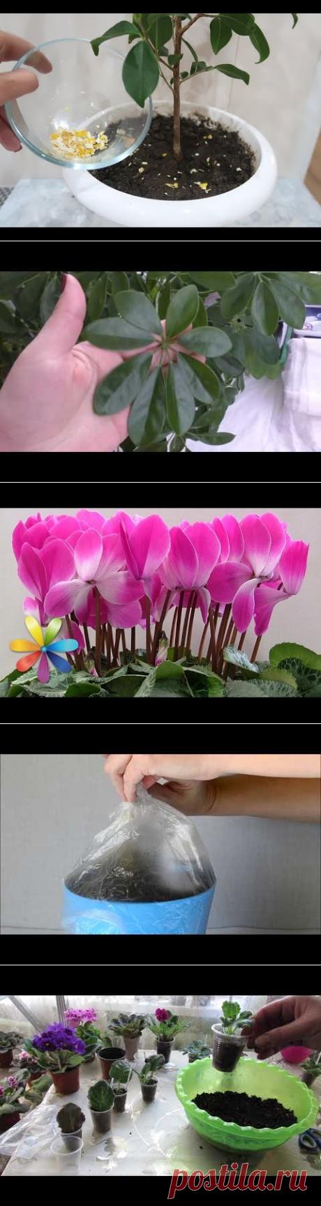 (913) 6 НЕОБЫЧНЫХ УДОБРЕНИЙ для комнатных цветов - YouTube