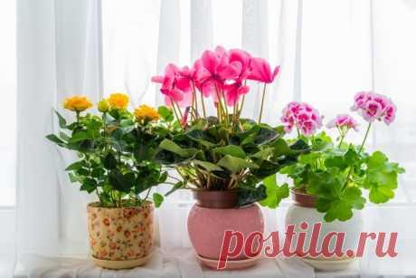 Органические подкормки для рассады и комнатных растений