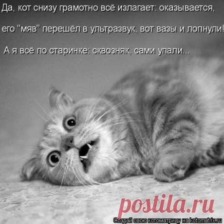 Лучшая котоматрица недели (35 фото)
