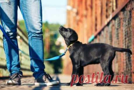 Каждый владелец собаки должен соблюдать эти правила - Братья наши меньшие - ГОРНИЦА - дайджест новостей, авторские блоги