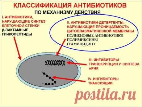Группы антибиотиков. Классификация и основные препараты. Таблица