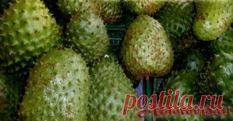 Саусеп фрукт