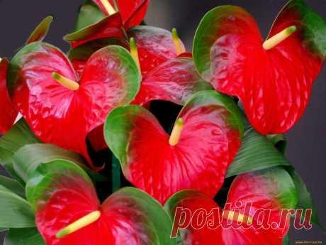 Средство для бурного цветения растений — Полезные советы