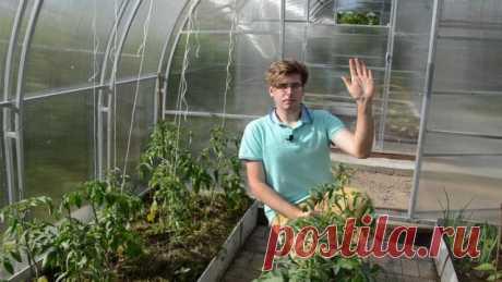 Формирование томатов: удаляем пасынки и листья правильно. Видео — Ботаничка.ru