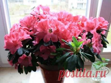 Лунный календарь комнатных растений на2020 год Растения приносят пользу, поднимая настроение инаполняя дома уютом. Уход закомнатными цветами проще всего осуществлять, ориентируясь налунный календарь. Сего помощью каждый сможет вырастить прекрасные цветы.