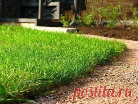 Хороший способ выращивания газона без сорняков.