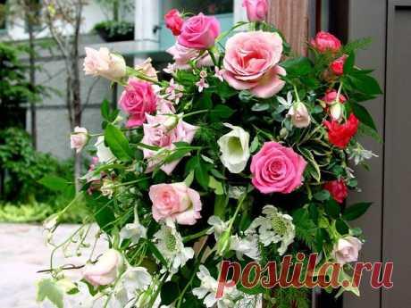 Чудо-рецепт для роз в открытом грунте. Секретный ингредиент | Цветы в квартире и на даче – от Радзевской Виктории | Яндекс Дзен