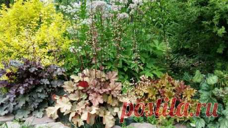 Секреты выращивания гейхеры в своем саду | АЗБУКА ЦВЕТОВ | Яндекс Дзен