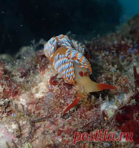 Яркий морской слизень, открытый 16 лет назад у побережья Австралии, до сих пор остается безымянным. За помощью в выборе имени ученые обратились ко всем любителям природы.