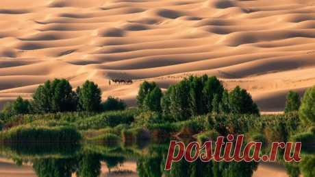 Интересное о пустынях мира: самая холодна и самая жаркая пустыня | На всякий случай