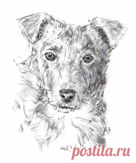 Рисование собаки карандашом