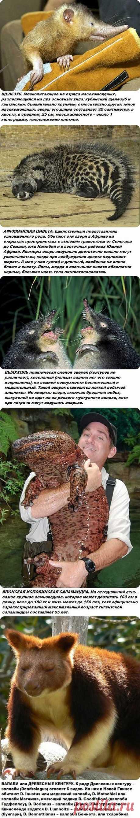 Самые странные и редкие животные на планете.