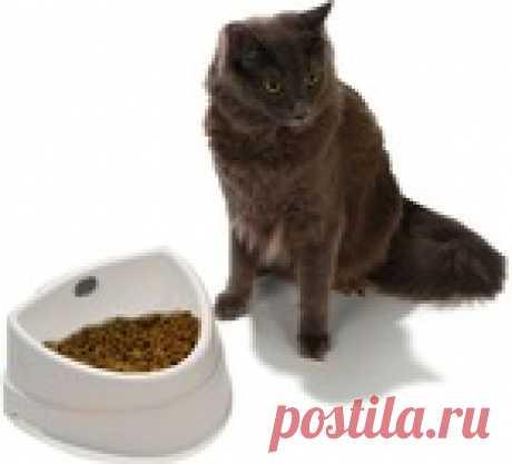 Самодельный сухой корм для кошек