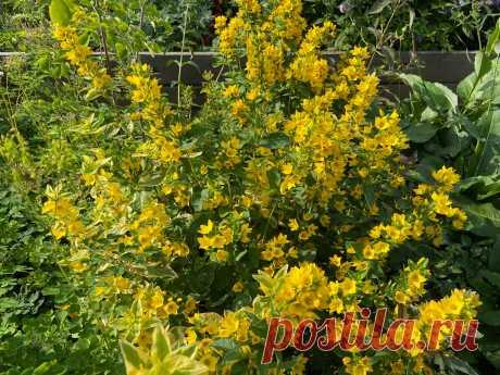 Топ-10 растений середины июля. Наш выбор! | Александровский сад | Яндекс Дзен