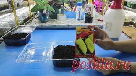 🍅Самый простой способ посадки перца на рассаду ! Выращивание сеянцев из семян🍅 🌱