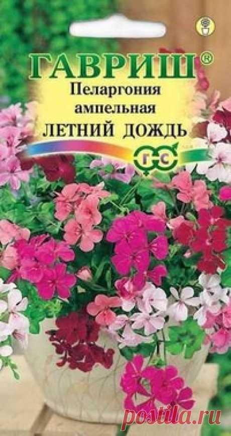 """Пеларгония ампельная """"Летний дождь"""", смесь"""