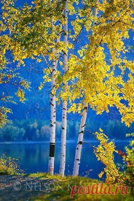 леса поля луга