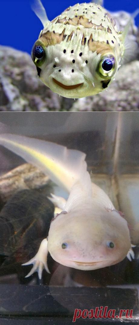 2 улыбающихся рыбы