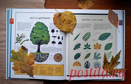 Мир природы: более 1000 удивительных фактов и красочные плакатные иллюстрации
