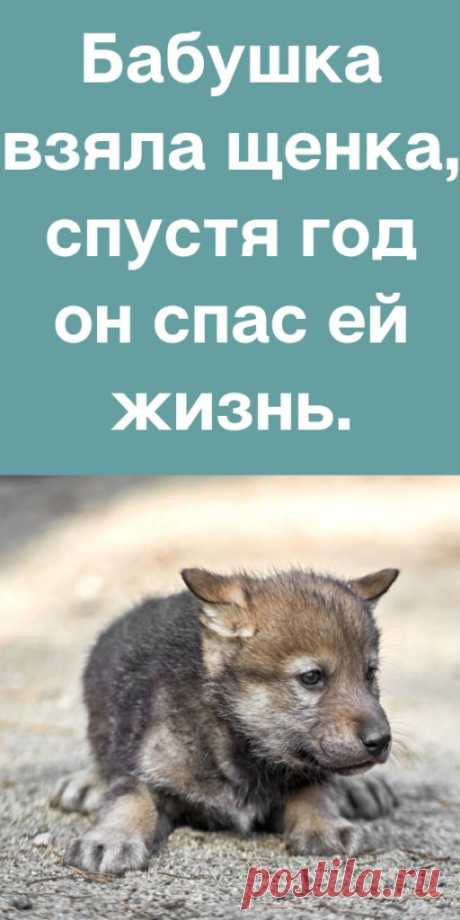 Бабушка взяла щенка, спустя год он спас ей жизнь. - likemi.ru