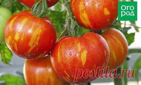 Полосатые томаты – лучшие сорта с фото и описанием | На грядке (Огород.ru)