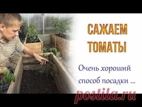 Наверное самый лучший способ посадки томатов