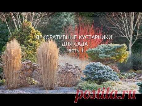 """Вебинар """"Декоративные кустарники. Часть 1"""""""