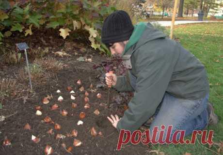 Подготовка сада к холодам — Садоводка