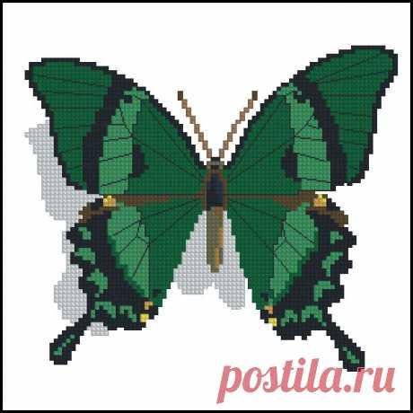 ChM2001-06Papilio palunurus- скачать схемы для вышивки бабочек