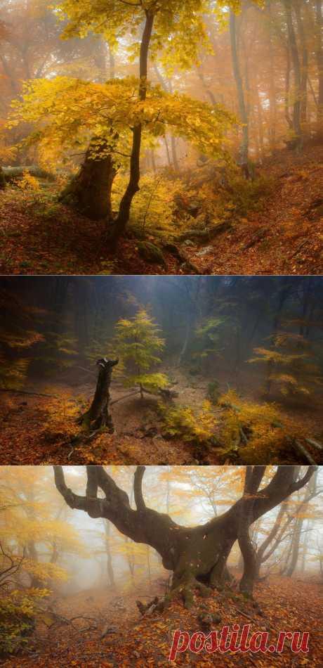 Таинственный лес. Фотограф Андрей Уляшев
