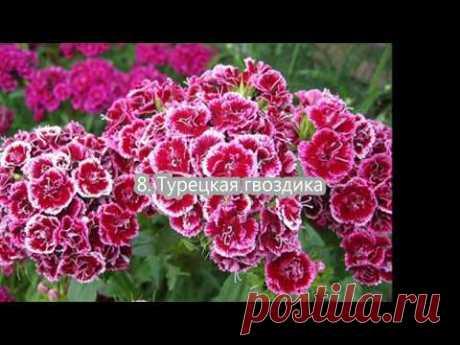 Какие цветы можно посеять, посадить в июле.