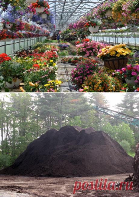 Выращивание цветов в теплице | Цветовод-Консалтинг