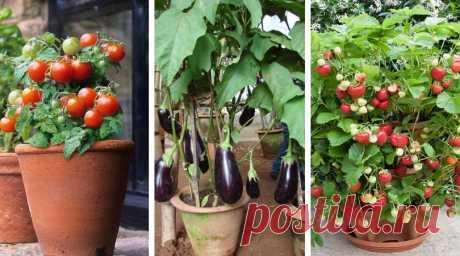 Как выращивать ягоды и овощи в контейнерах: 57 вкусных идей для дачи и города | Живу за городом