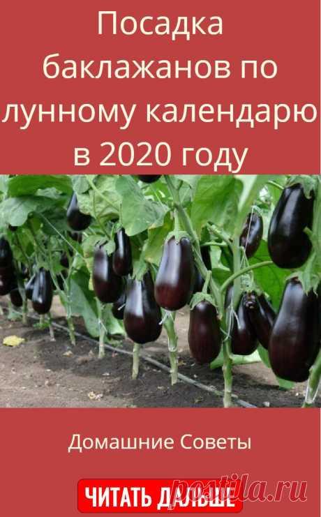 Посадка баклажанов по лунному календарю в 2020 году
