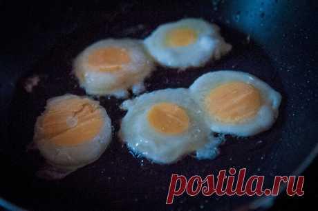 Муж проиграл мне спор))) Как приготовить из одного куриного яйца - 5 яичниц. Делюсь необычным рецептом | Дом с Котом | Яндекс Дзен
